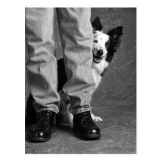 Postal Yo y mi sombra - perro del collie