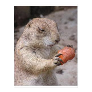 Postal Zanahoria