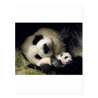 Postal zoo-atlanta_giant_panda_lun-lun_and_cub