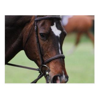 Postales árabes lindas del caballo