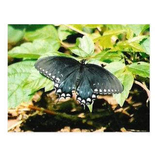 Postales blancas negras de la foto de la mariposa
