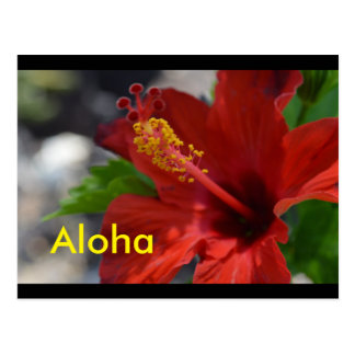 Postales de Hawaii