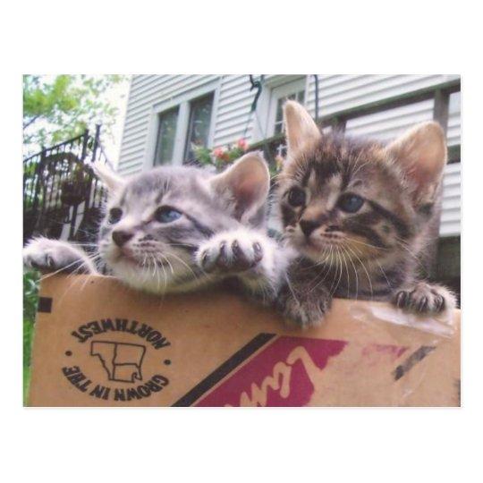 Postales de los gatitos