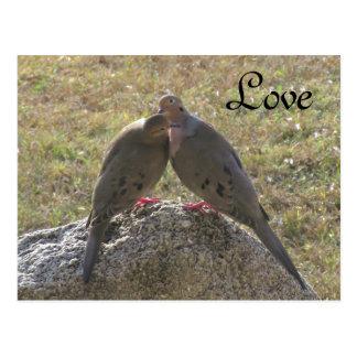 Postales del amor de los pájaros de las palomas de