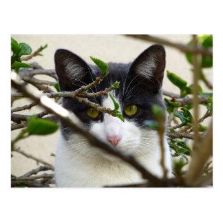 Postales del gatito de Sasha