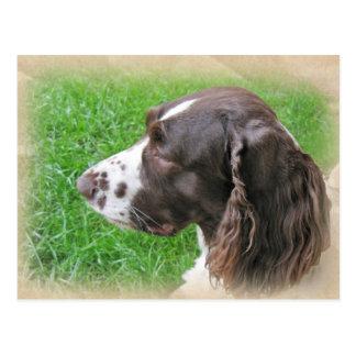 Postales del perfil del perro de aguas de saltador
