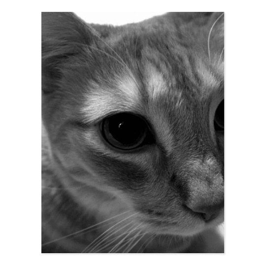 Postales del primer de la cara del gato