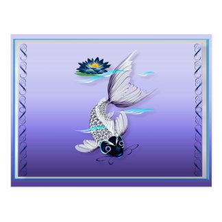 Postales Koi-Azules blancas del lirio
