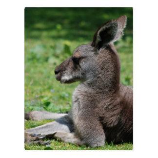 Postales lindas del canguro