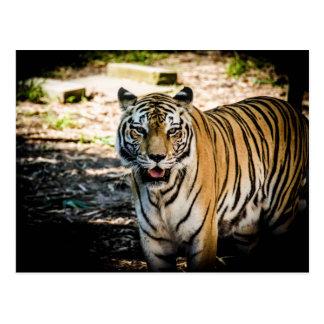 Poste del tigre postal