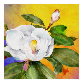Póster Acuarela blanca de la magnolia por Ozias