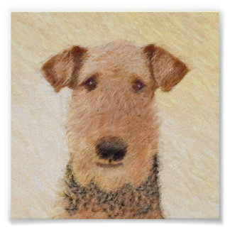 Póster Airedale Terrier