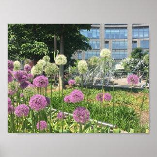 Póster Allium de la púrpura de New York City del círculo