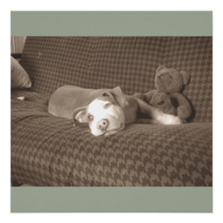 Póster American_Pit_Bull_Terrier_and_teddy_bear_on_couch.