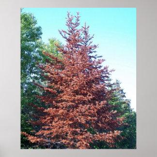 Poster anaranjado del árbol de pino