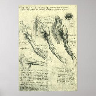 Póster Anatomía del brazo y del hombro de Leonardo da