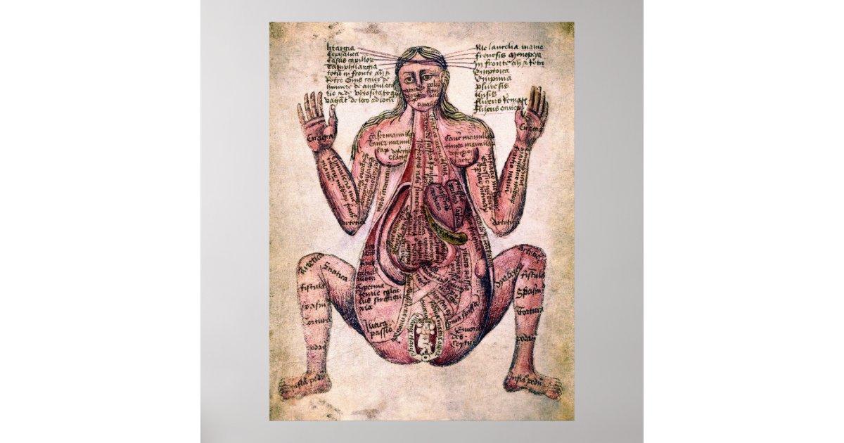 Hermosa Anatomía De Una Mujer Embarazada Ilustración - Anatomía de ...