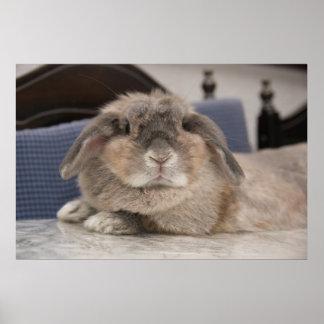 Póster Andora el conejito: Chillaxing