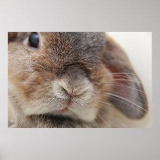 Póster Andora el conejito: Mirada fija