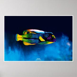 Póster Angelfish by Johannes Stötter