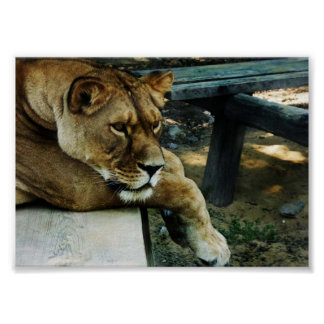 Poster animal del valor de la reina de la selva
