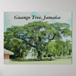 Póster Árbol de Guango, Jamaica