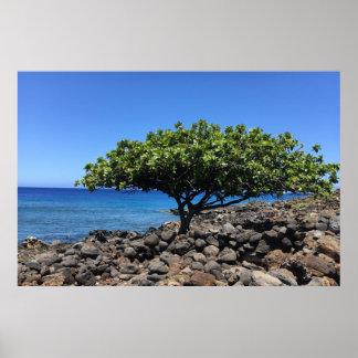 Póster Árbol grande de la isla