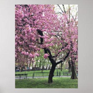 Póster Árbol rosado bonito NYC New York City de la flor