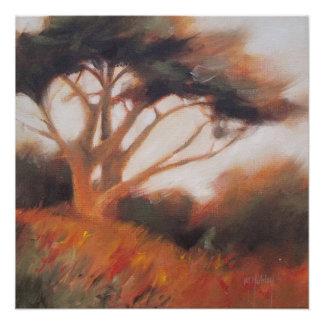 Póster Árboles de California Monterey Cypress