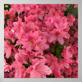 Póster Arbusto floreciente rosado brillante