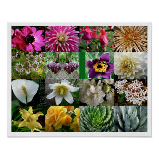 Póster Arrebatos florales