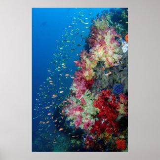 Póster Arrecife de coral subacuático, Indonesia