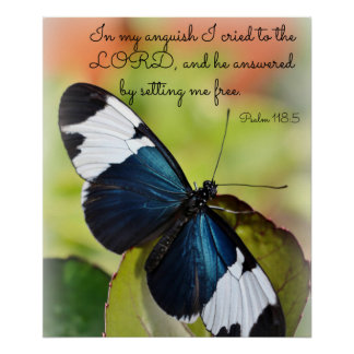 Poster azul de la mariposa de Longwing