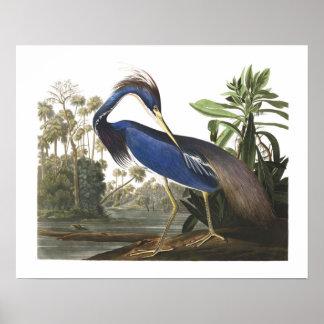 Poster azul del ejemplo del pájaro de la garza de póster
