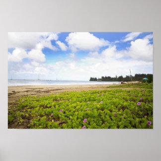 Póster Bahía de Hanalei, flores de la playa de Kauai