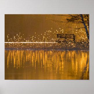 Póster Banco solo por el lago en la luz de oro
