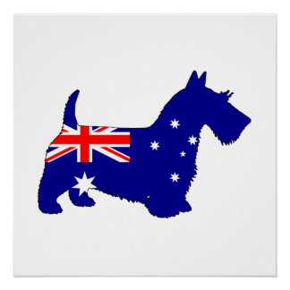 Póster Bandera australiana - escocés Terrier
