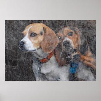 Póster Beagles que miran hacia fuera la puerta de