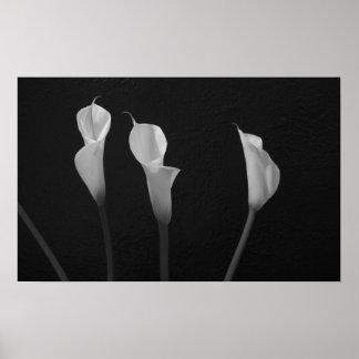 Poster blanco y negro de las flores póster