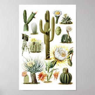 Poster botánico del ejemplo del cactus del vintage póster