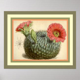 Póster Cactus floreciente del Ca botánico 1847 de Curtis