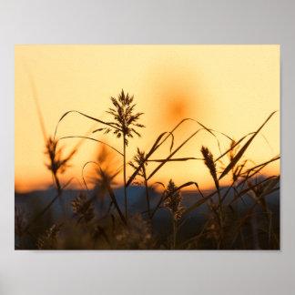 Póster Cañas en el cartel de la luz de la puesta del sol