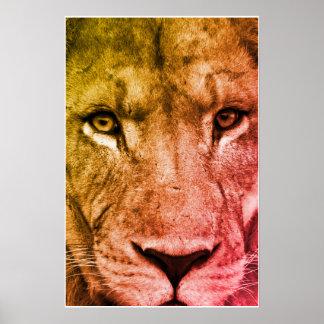 Póster Cara intensa del león el mirar fijamente