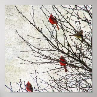 Póster Cardenales en un Grunge del árbol