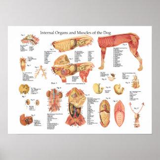 Póster Carta del poster de la anatomía del órgano interno