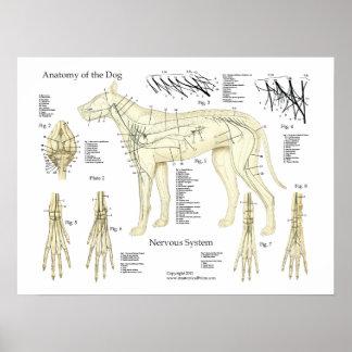 Póster Carta del poster de la anatomía del sistema