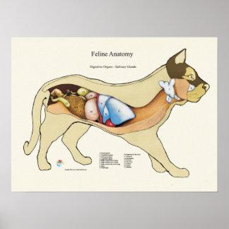 Póster Carta digestiva interna del veterinario de la