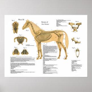 Póster Carta esquelética del poster de la anatomía del