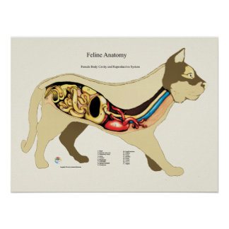 Póster Carta femenina interna del veterinario de la