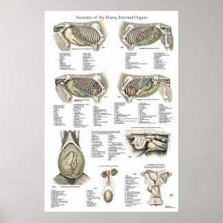 Póster Carta interna del poster de la anatomía del